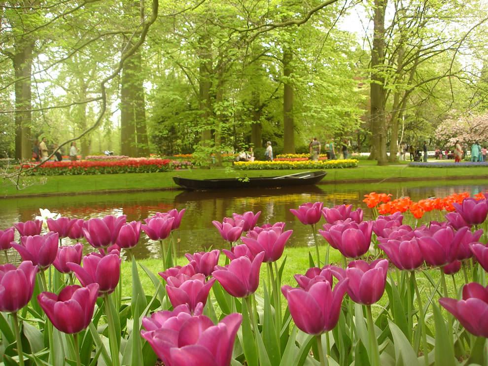 Тюльпаны - цветы весны (3)