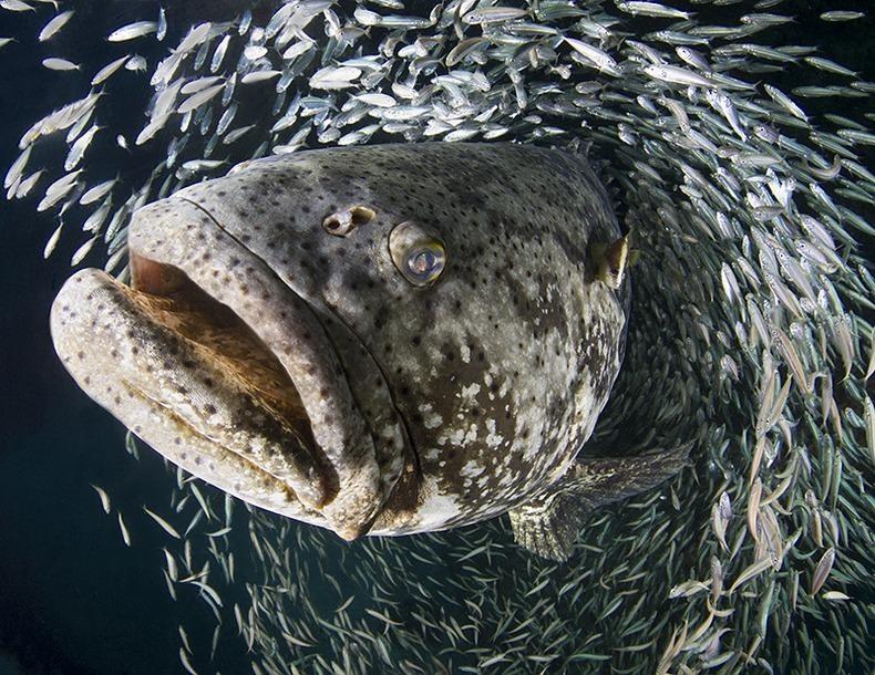 Подводный мир (12)