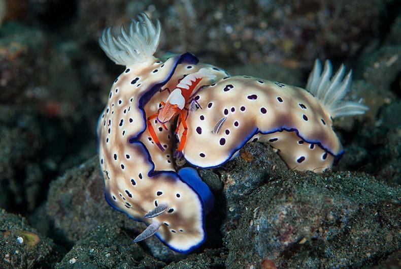 Подводный мир (4)