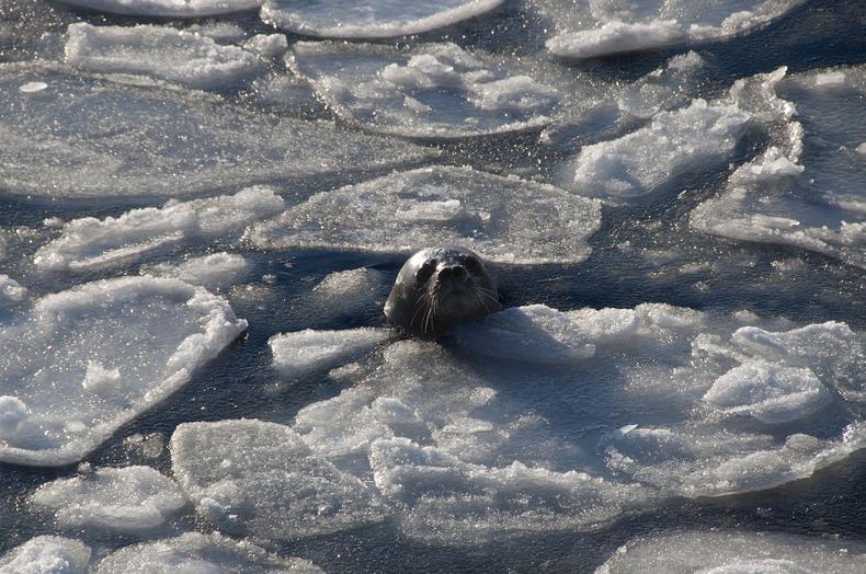 Ледяной блин (9)
