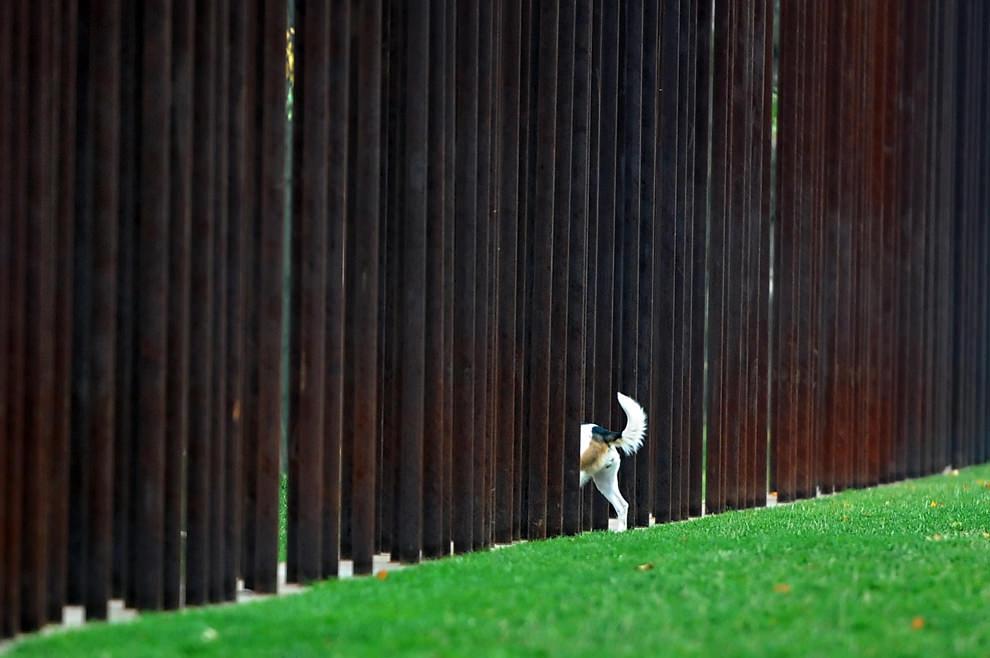 стена (16)