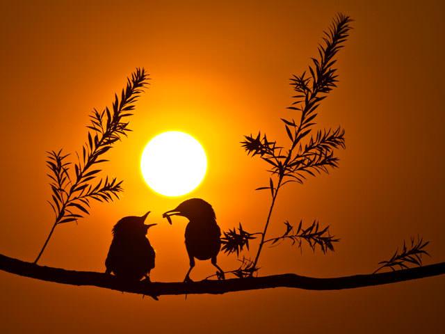 Из жизни птиц (11)