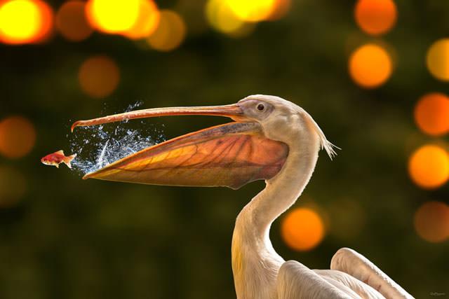 Из жизни птиц (12)