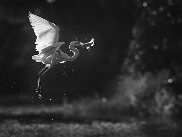 Из жизни птиц (19)