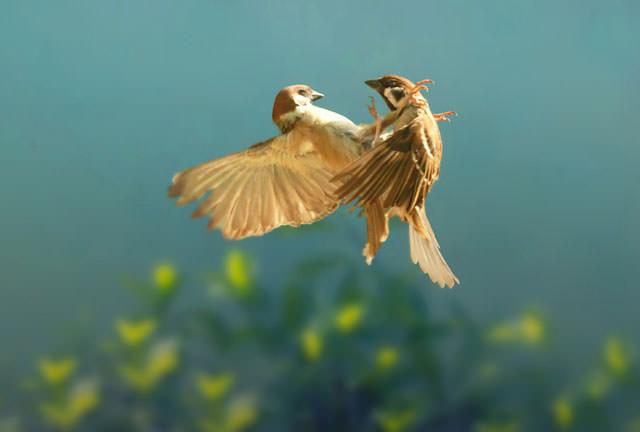 Из жизни птиц (24)