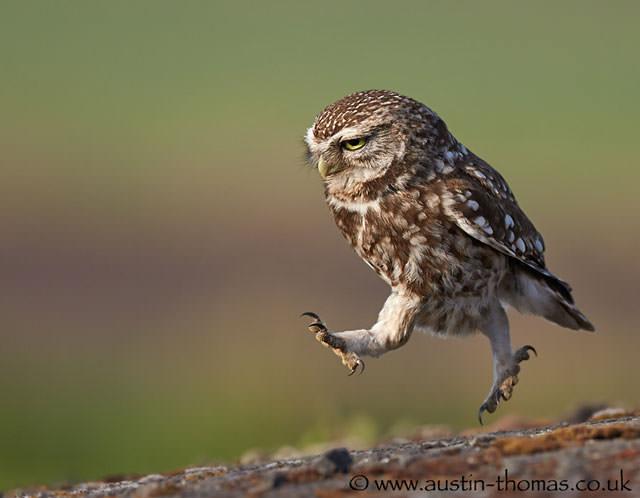 Из жизни птиц (4)