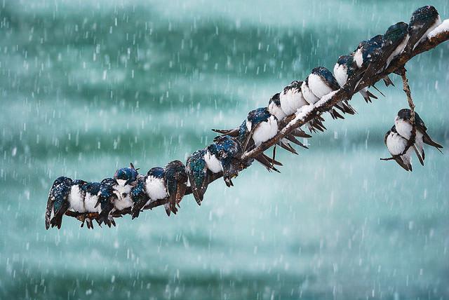 Из жизни птиц (5)