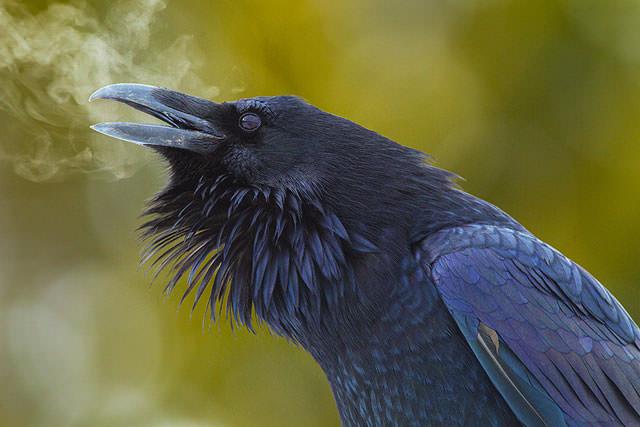 Из жизни птиц (8)