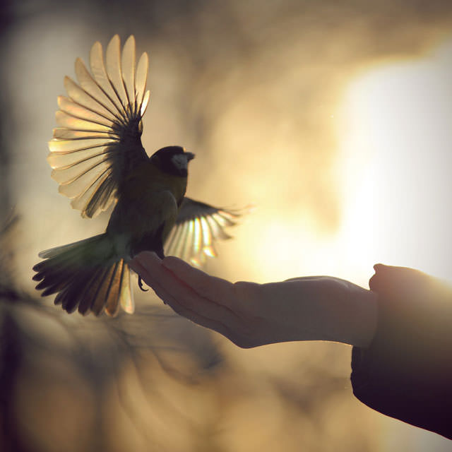Из жизни птиц (9)