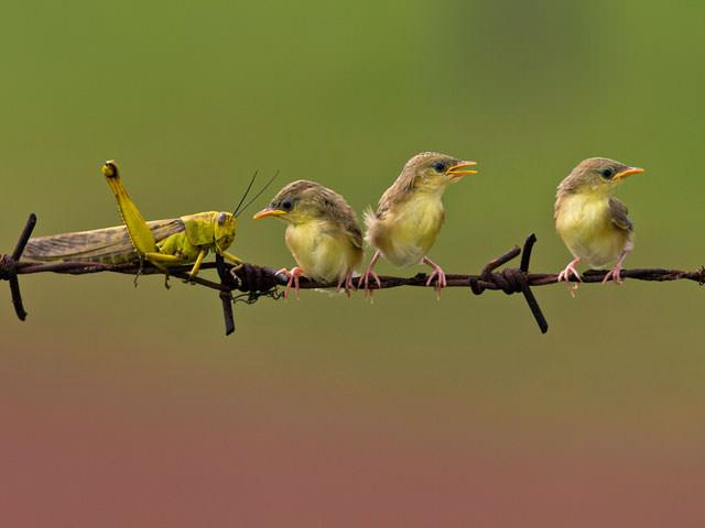 Из жизни птиц (10)