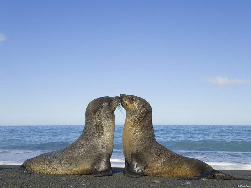 Признания в любви в животном мире (11)