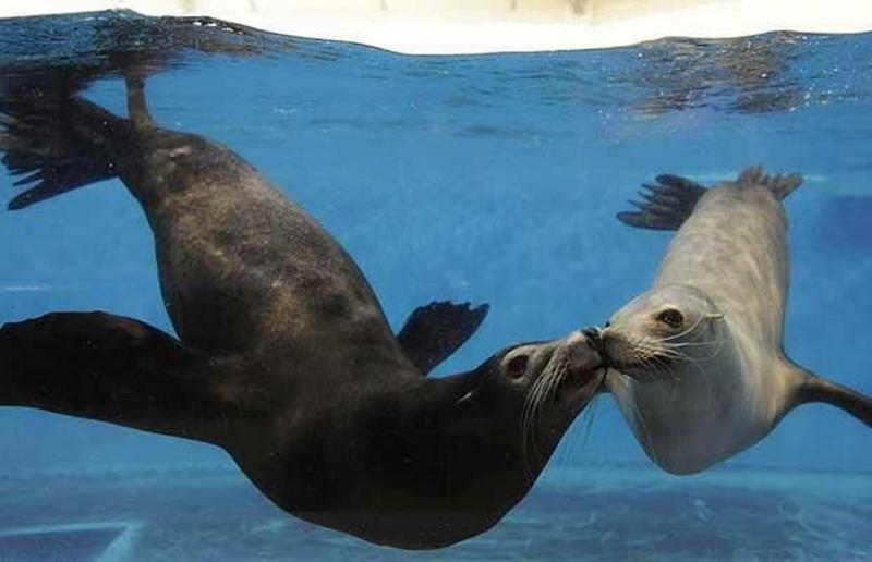 Признания в любви в животном мире (17)