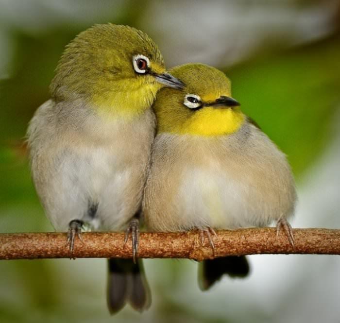 Признания в любви в животном мире (21)