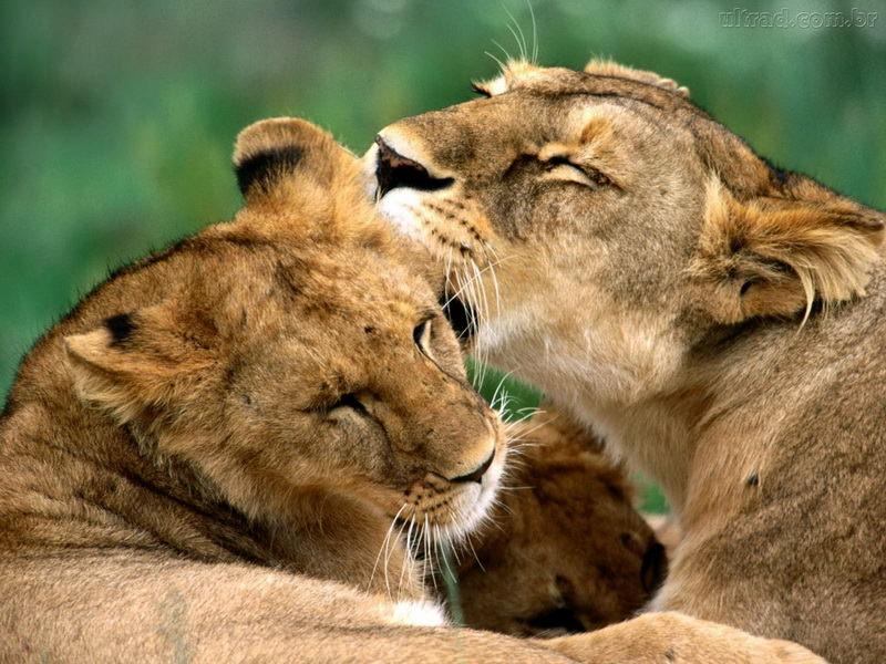 Признания в любви в животном мире (10)